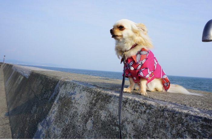 犬の手作り洋服